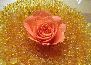 Blume Silicagel trocknen