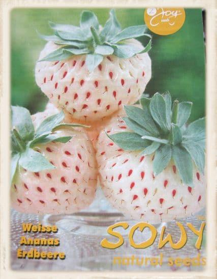 Weisse Erdbeersamen in der Samentüte