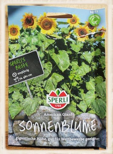 "Sonnenblume ""American Giant"""