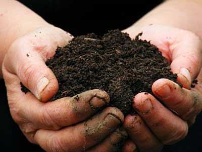 Bodenprobe im Garten