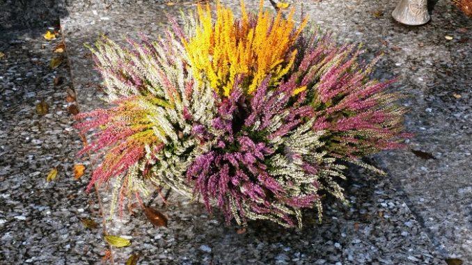 Herbstgrab mit Erika in bunten Farben