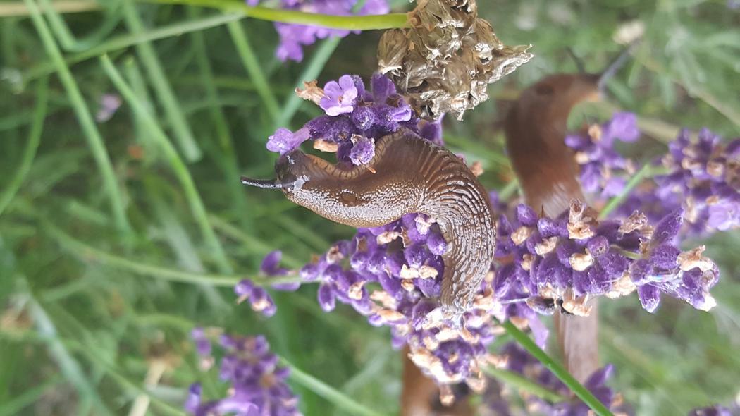 Schnecken Im Garten U2013 Tipps Zur Natürlichen Schneckenbekämpfung
