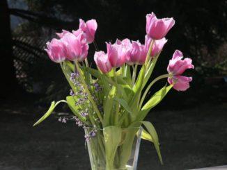 Tulpen in der Blumenvase