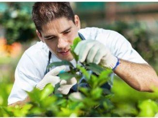 Gartenbau studium
