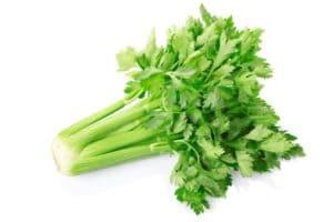 riesen zucchini verwerten