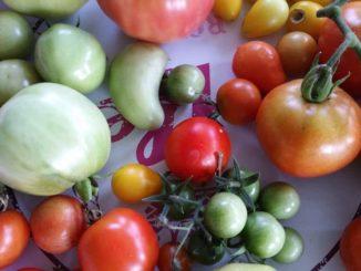 Tomaten, Tomatensorten von Gartenzeitung.com