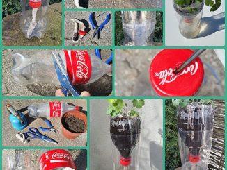 Bewässerung Aussaat Garten mit PET-Flasche