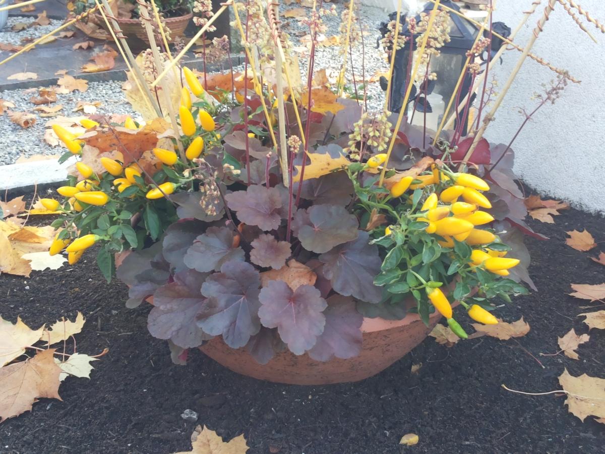 Grabpflege, Grabgestaltung im Herbst  Gartenzeitungc