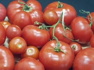 Tomate, Tomate, Gartenzeitung.com