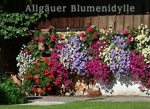 Blumen für Blumenampeln