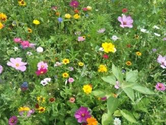 Blumenwiese, natürliche Blumen, Wiese, Blumen,
