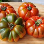 Tomaten, alte Sorten, alte Tomatensorten