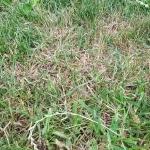 Rasen, Wiese, Gras, Neusaat, Gartenzeitung.com