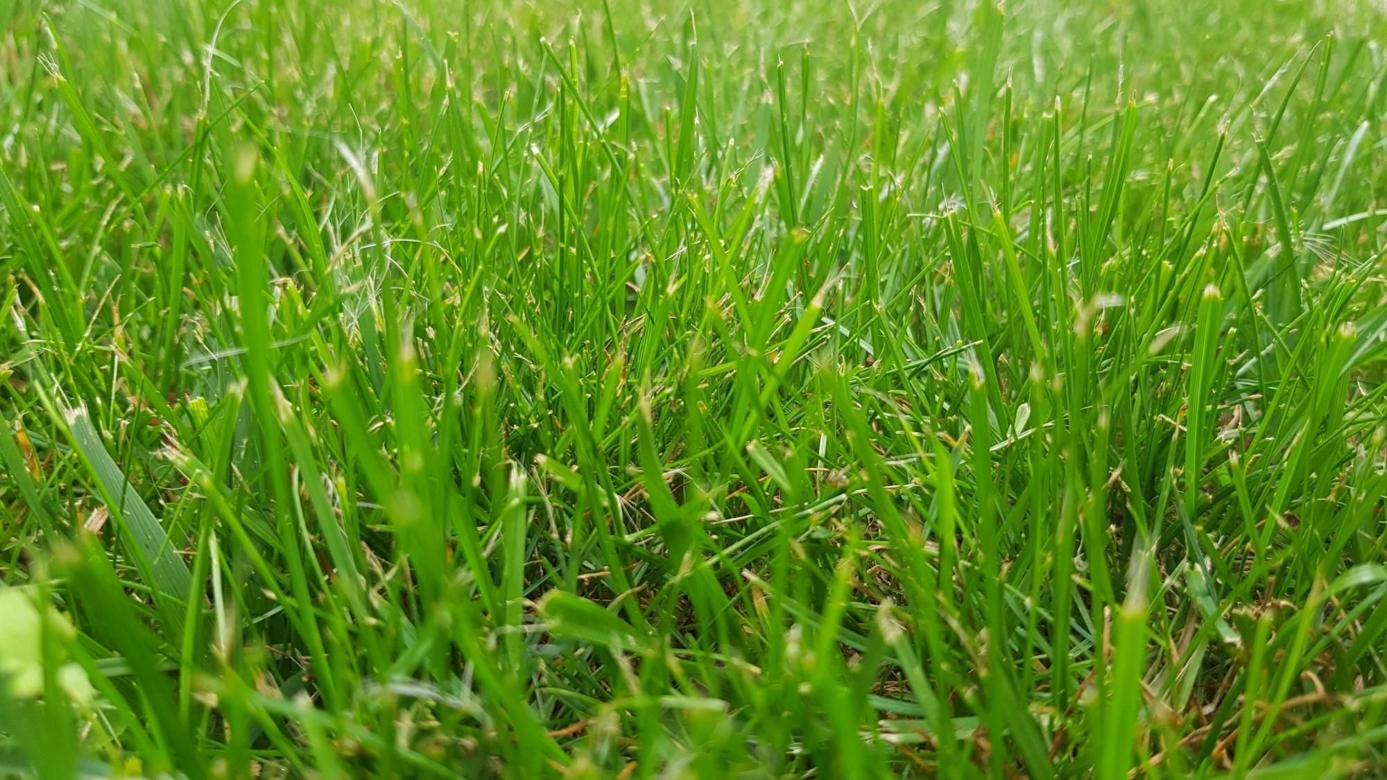 Rasenschule 8 Tipps Für Einen Schönen Rasen Gartenzeitungcom
