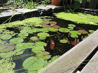 Pool zum Teich umbauen