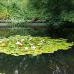 Teich, Pool, Seerosen, Wasser, Gartenzeitung.com