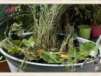 Miniteich bepflanzen - kleine Teichpflanzen finden hier ihr zu Hause