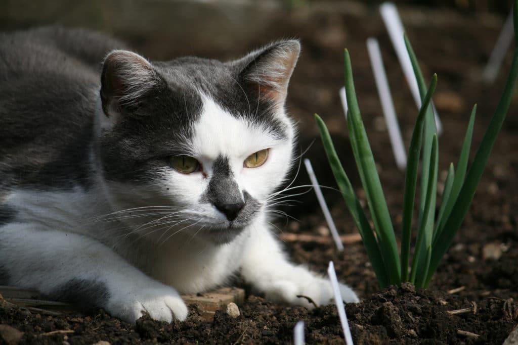 Katze, Tier,