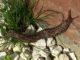 Tigerschnegel - eine getigerte Nacktschnecke