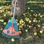 Äpfel, Apfelernte, Apfel, entsaften,Gartenzeitung.com