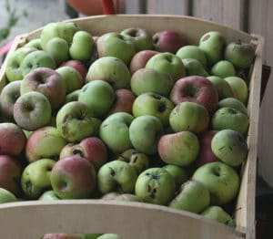 Äpfel lange lagern