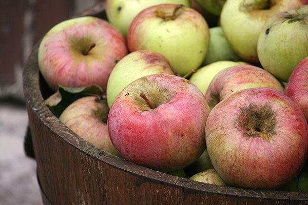 Apfelernte, Bratäpfel aus überschüssigen Äpfeln herstellen