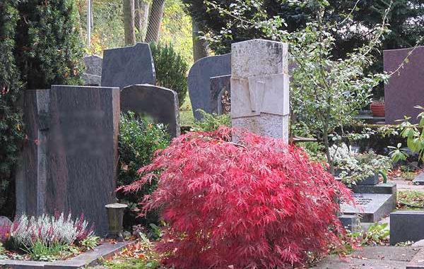 Grabbepflanzung Herbst Ahorn
