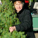 Einen traumhaften Christbaum kaufen