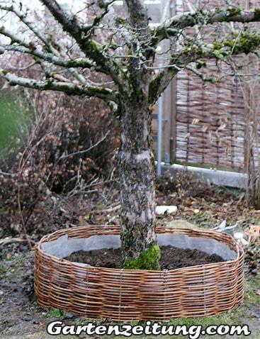 Baum mit einem Weidenzaun umflechten, Gartenzeitung.com