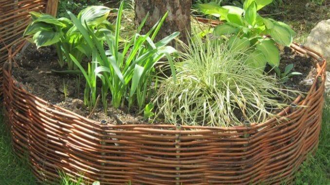 Weiden Selber Flechten Baumrondell Baum Mit Weide Umflechten