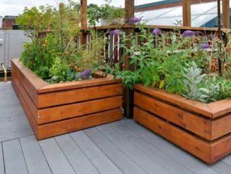 Tomatenanbau auf dem Balkon – Gartenzeitung.com