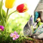 Frühling Garten