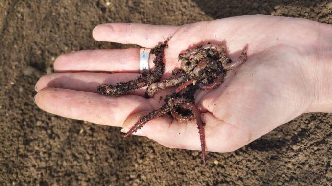 Regenwürmer auf der Hand