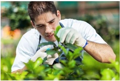 Studium Gartenbau: als duale Ausbildung auch möglich