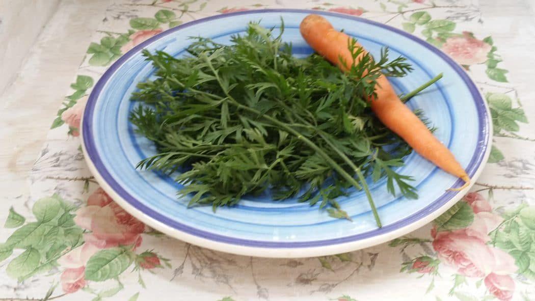 Karottenkraut, Möhrenkraut ist essbar!