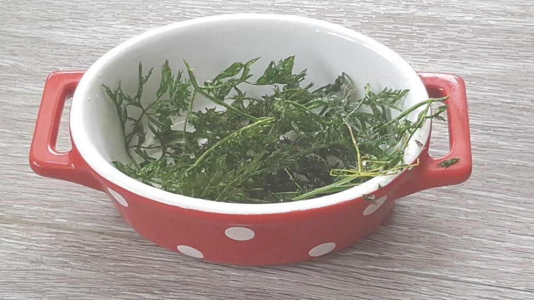Möhrengrün, Karottengrün ist essbar!