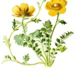 Blume mit botanischem Namen