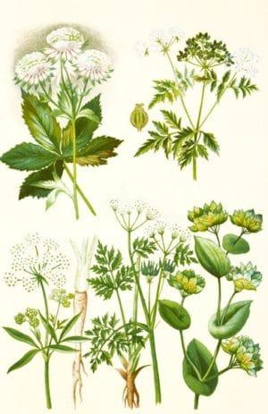 Botanische Pflanzenbezeichnungen