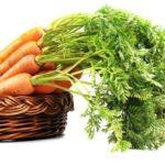 Karottenkraut verwenden und verwerten