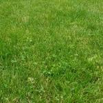 Rasen, Wiese, Gras, Gartenzeitung.com