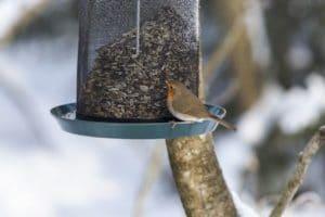 FFuttersilo für den Winter, Vogelfütterung