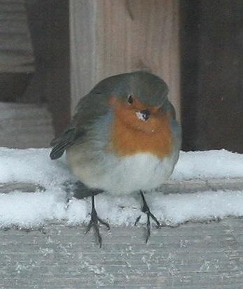 Vogel im winterlichen Garten