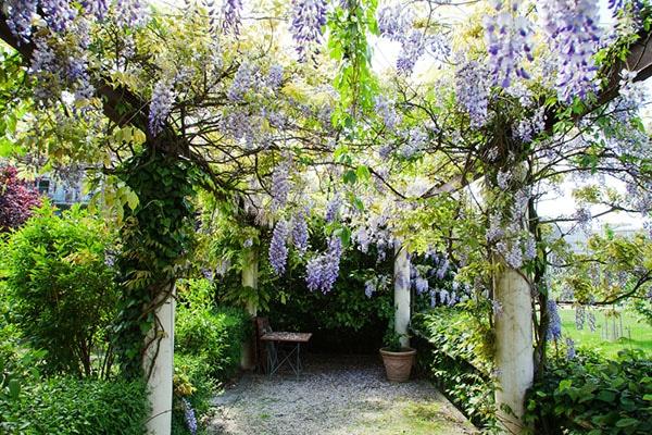 Die 10 Schönsten Kletterpflanzen Für Pergolas Und Terrassen