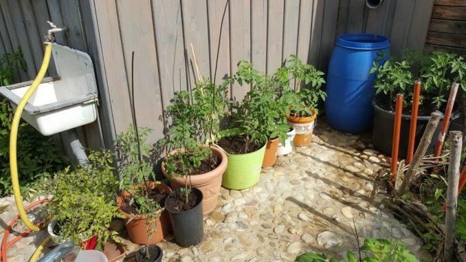 tomatenanbau auf dem balkon. Black Bedroom Furniture Sets. Home Design Ideas