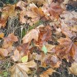 Herbstlaub, Laub, Blätter