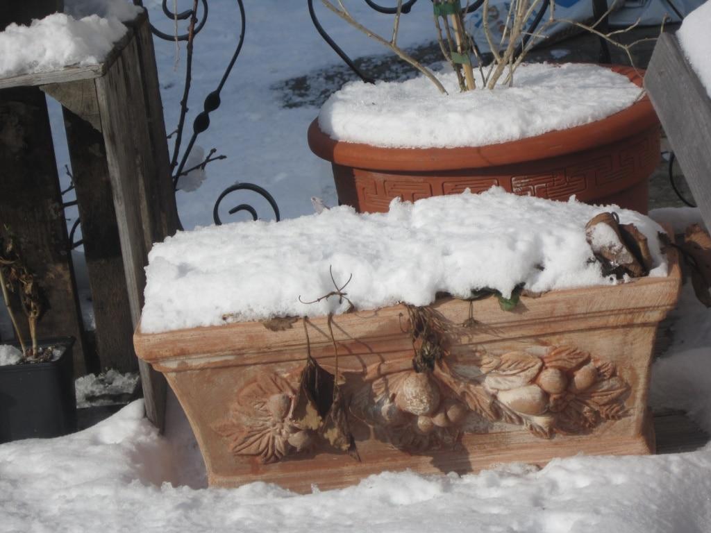 Kübelpflanzen Winter, Gartenzeitung.com