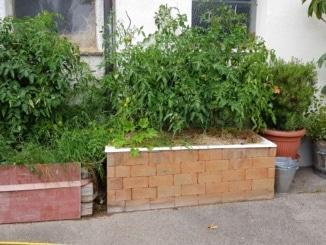 Badewanne, Wanne, Kräuter, Tomaten, Gartenzeitung.com