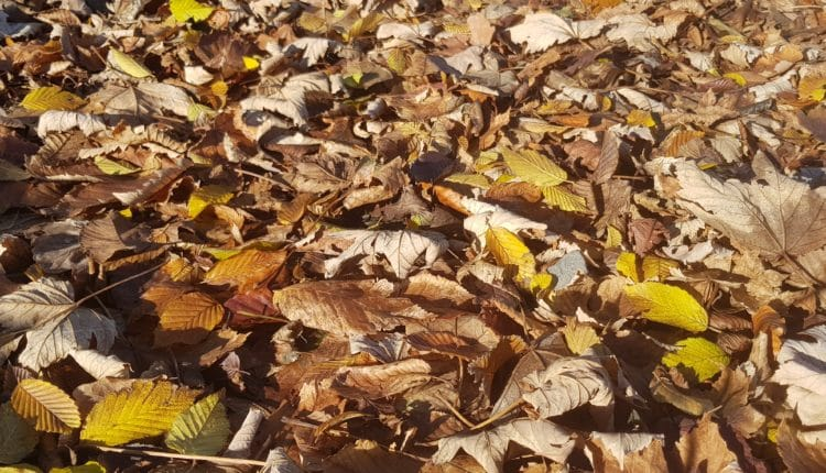 Laub, Blätter, Herbstlaub