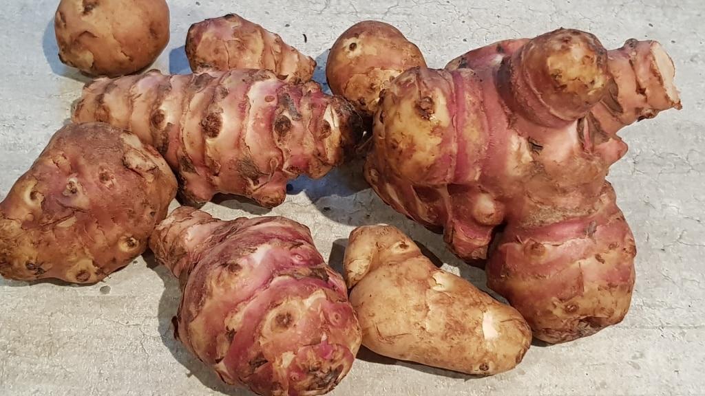 Topinambur, Kartoffel, Süßkartoffel, Gartenzeitung.com