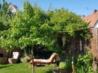 Liege, Garten, Wiese